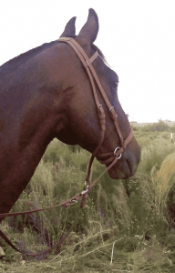 Dr Cook's Bitless Beta Bridle Headstall